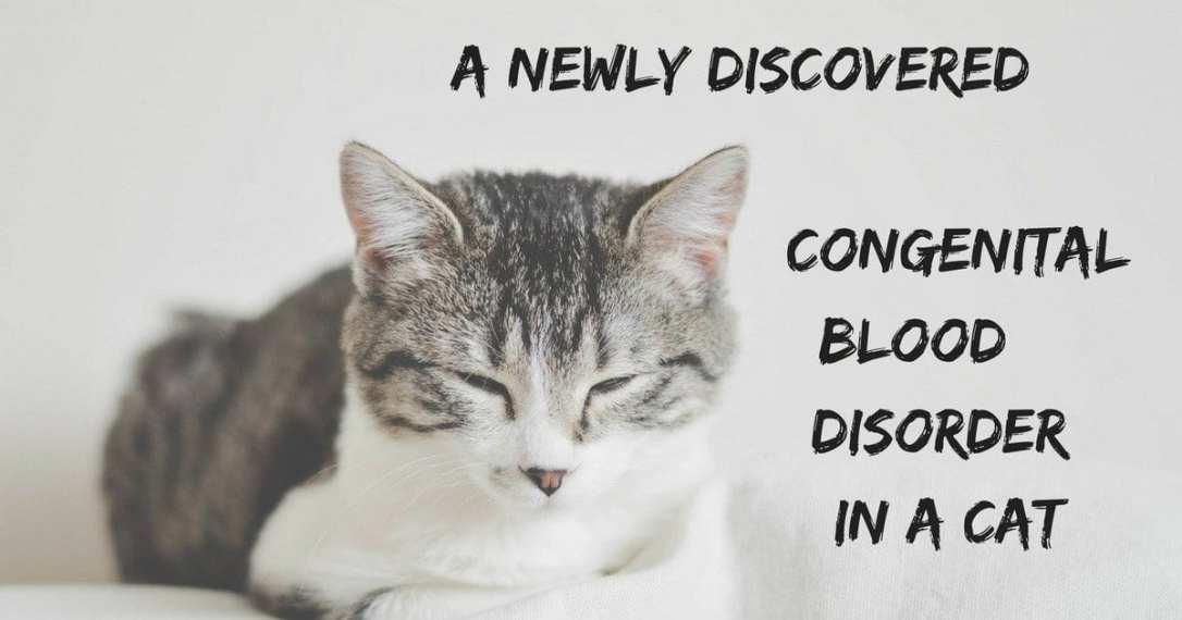 cat, sleepy, blood disorder, veterinary news