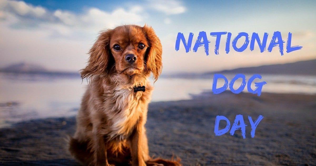 national dog day, holiday, dog on a beach, dog