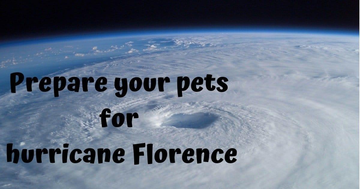 Aerial view of a tropical cyclone hurricane
