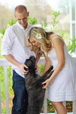 California law for pet custody