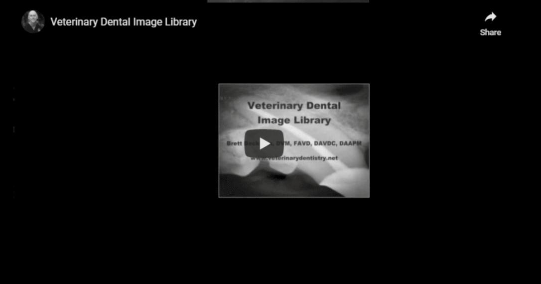 Veterinary Dental Image Library