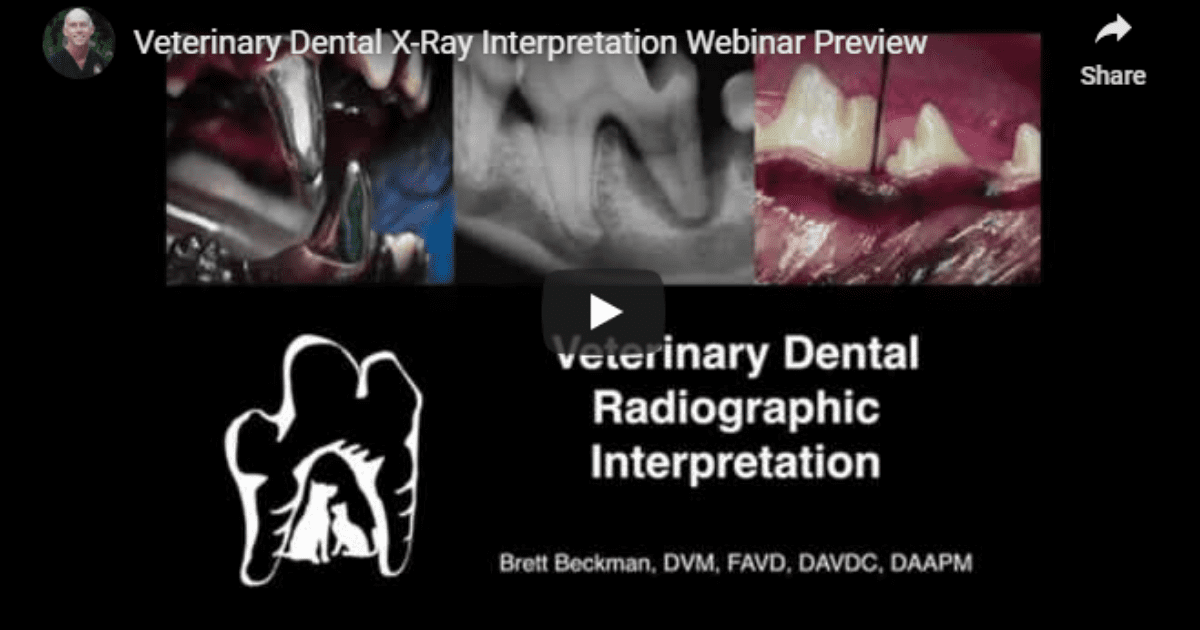 Veterinary Dental X-Rays