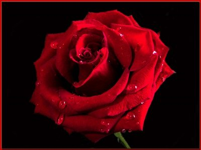 concorso letterario gratis la rosa