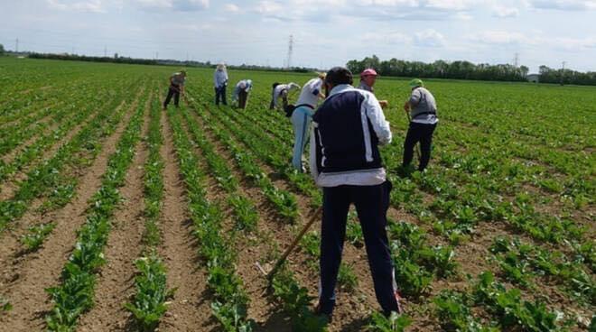 giovani-stagionali-agricoltura