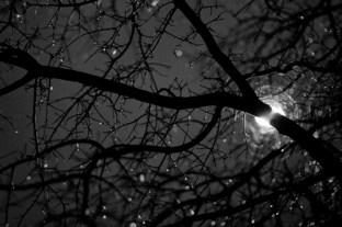 [POR] as árvores que se expandem e se alongam,... [ING] the trees expanding and elongating,...