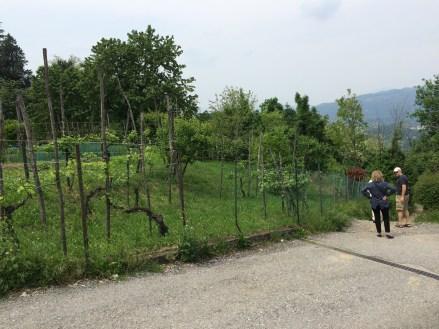Garden near the parking lot of Montevecchia