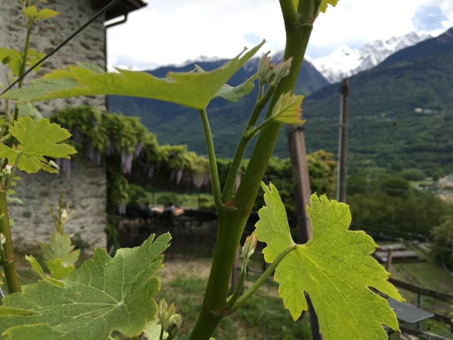 La Fracia in Teglio (Valtellina)