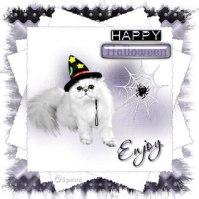 Enjoy_Witchy_Web~6paws_jpg