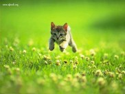 gattino_3