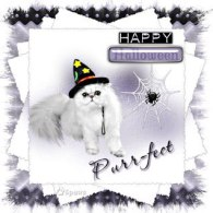 Purrfect_Witchy_Web~6paws_jpg