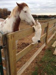 cat_horse_kiss_love1