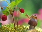 snail_tale_02