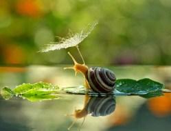 snail_tale_05