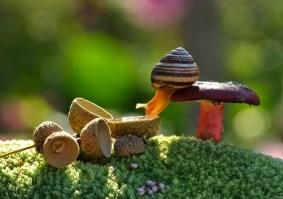 snail_tale_09