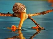 snail_tale_11