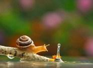 snail_tale_12