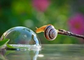snail_tale_15