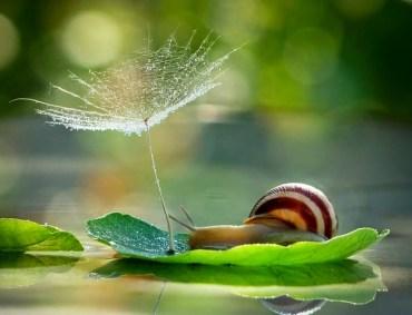 snail_tale_16