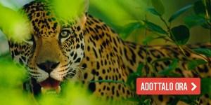 giaguaro_01