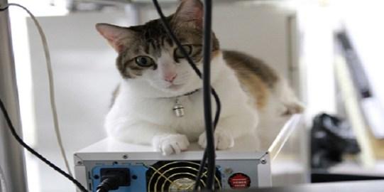 cat-computer-box