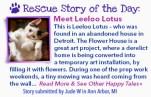 stories-Feb14-20LeelooLotus