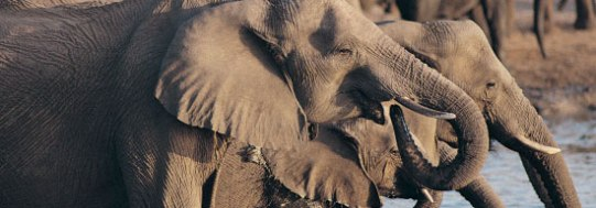 071715-citizen-elephant