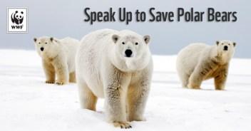 Polarbear_naturepl-com_StevenKazlowski_WWF_email