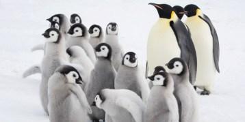 penguins-school-adozioni