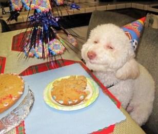 cane-che-festeggia-il-compleanno