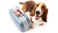 cane-vacanze-pet-friendly