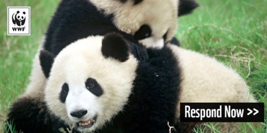 GiantPandas_MichelGunther_WWF-Canon_EmailHeader