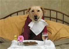 Dogbedbreakfast