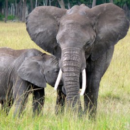 Mother and Baby Elephant ....