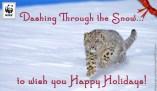 holiday_snowleopard_ecard