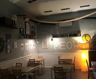 cat-cafe-italia