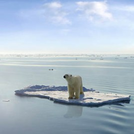 A polar bear managed to get on one of the last ice floes floating in the Arctic sea. Due to global warming the natural environment of the polar bear in the Arctic has changed a lot. The Arctic sea has much less ice than it had some years ago.
