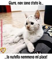 gatto-nutella