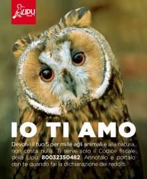 gufo-5x1000-animali