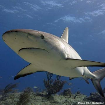 DOW-SharkFins-WinningImage_500
