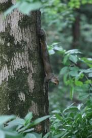 Parco Miradolo, scoiattolo