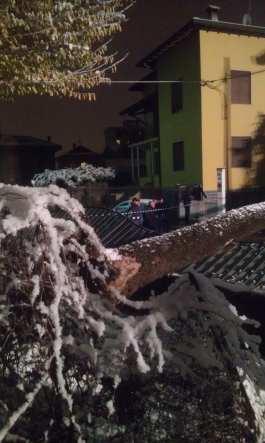 albero caduto via don monza saronno