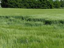 maggio2013 - cerchi nel grano (2)