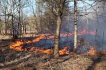 06032015 incendio parco groane foto di matteo turconi (3)