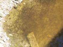 28062015 salvataggio pesci lura (14)