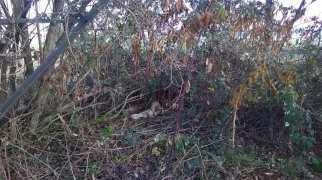 solaro volpi morte (1)