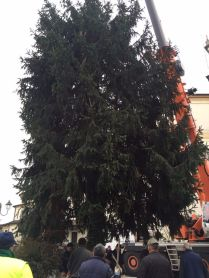 lazzate-albero-natale-8
