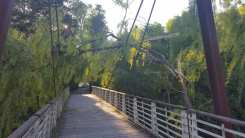 20170419 albero su ponte strallato lura v (2)