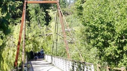 20170419 albero su ponte strallato lura v (3)