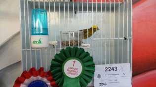 20171111 competizione ornitologica regionale saronno (12)