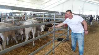 20180425 fiera del bestiame origgio bovini (2)
